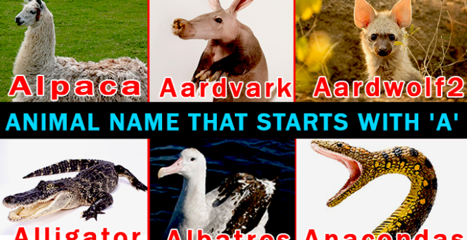 Animal name starting with A