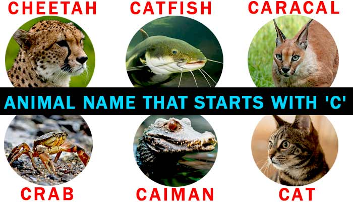 animals that start with the letter c